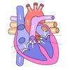 動脈硬化から心筋梗塞へ!?心臓病にも色々あります
