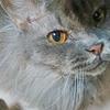 慢性腎不全の猫さくらの膀胱炎、途中経過