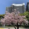 皇居 和田倉噴水公園と皇居外苑