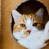 るるちゃん写真集vol.10「のぞき猫」