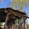 天空のドラゴン観測所〜樹上のお茶会と垂直調査の巻
