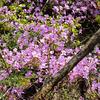 荒神山で見かけた花 〜4月12日〜