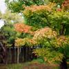 小さな秋みつけた!田舎はどこも最高のロケ地。
