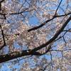 桜が咲く頃に