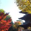 世田谷区豪徳寺の紅葉。ここの紅葉、とても気に入りました!