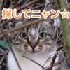 猫を探すゲーム、その名も「猫を探す」が面白い