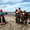 内蒙古からチベット7000キロの旅㉕ 壁のできた草原