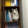 猫はなんでこんなところにいるの?