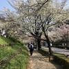 3/28 皇居半周と美術館の春まつり、眺めのよい部屋