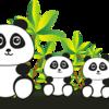 パンダのレンタル料が高くてビックリ!そんなにパンダ見たい?!