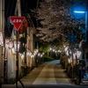牧野公園の桜 2021.3.26