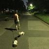 夜の水元公園