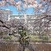 桜が満開になる今こそ四月は君の嘘の聖地巡礼へ!