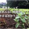 【疑問】草を抜く時間はどれくらいかかるのか?