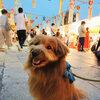【ペット同伴可のお祭り】四天王寺の七夕の夕べに行ってきました。