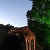 八木山動物園のナイトズージアムに行ってきた