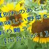 【キュウリって栄養がない?】8月23日の家庭菜園「おいしい野菜をありがとう」【とんでもない!ダイエットにはオススメですよ】