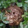 磐田市で庭木にできたスズメバチの巣を駆除してきました