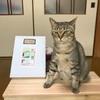 猫のマークがかわいい アビステラコーヒーさんのアソートはいろんな味が楽しめて美味しい♡