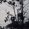 稲沢市の高齢者ふれあいサロンで、「認知症 声かけ訓練」!