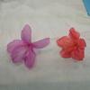 ツツジの花ってどんな花?