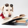 読書の時間を大切にしなさい。一冊の本との出会いがあなたの生き方を変えてくれることだってあります。