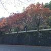 紅葉の鷹ノ巣山を歩く