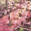 【本】死を前にした患者にすべきことは何だろう?『最後の医者は桜を見上げて君を想う/二宮敦人』