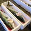 2019年2月1日 小浜漁港 お魚情報
