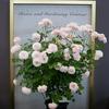 第18回 国際バラとガーデニングショウ