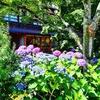 京都ぶらり 紫陽花の季節 祇園白川