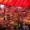 ミモザ・ガーデンの日記 京都の紅葉