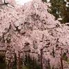 醍醐の花見  京極竜子の生涯 圧倒的なその美貌