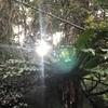 巨樹と山と海の森、御蔵島。MIKURAJIMA