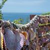 毎日一枚。「貝に願いを。」おすすめ:☆☆☆ ~写真で届ける伊勢志摩観光~