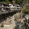 日本最古の温泉といわれる熊野本宮 湯の峰温泉に行ってきた。