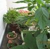 夏野菜と虫