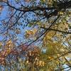 深まる秋の映画鑑賞