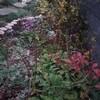 冬もカオスな庭