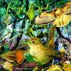 Forest Bird  Decoration Art