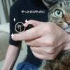 爪を切っているときの猫の表情