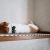 猫の夏バテに注意したい4つのこと【ペット】