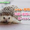 【GWおでかけ日記①】ふれあい動物園で可愛い動物たちに癒されました☆