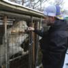 国際人道団体が、韓国の食用犬農場を買い取り、閉鎖を進める