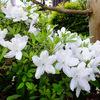 わが家の花たち5月 ー Part2 ー