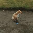 札幌のアベレージゴルファーがシングル目指します!