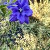 「道」のお話⑨~ 「盆道」の花に「中道」を観る、対立を離れ、極端な見方に偏らない教え ~ 「法の水茎」109