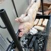 豚の丸焼き🐷超ワイルドなBBQ❗️アウトドア好きには1度はしてみたい夢の丸焼き❗️