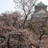 大阪城の桜は今週が見頃のピークかな