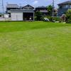 芝生の雑草 わが家の雑草